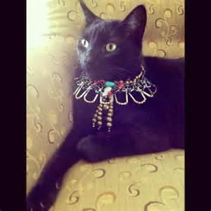 unique cat collars bastet custom scarab cat collar made with