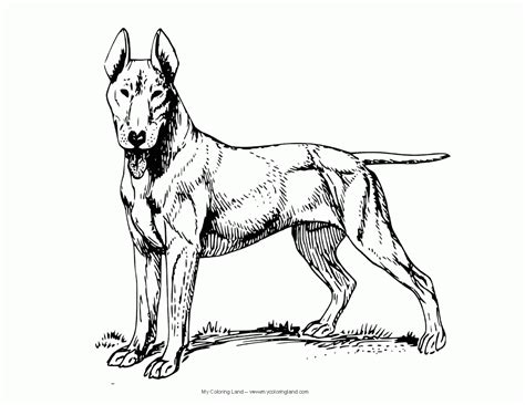 german shepherd dog coloring page coloring home