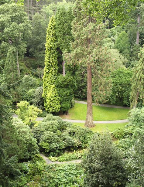landscaping trees pictures evergreen tree types popular evergreen trees for landscaping