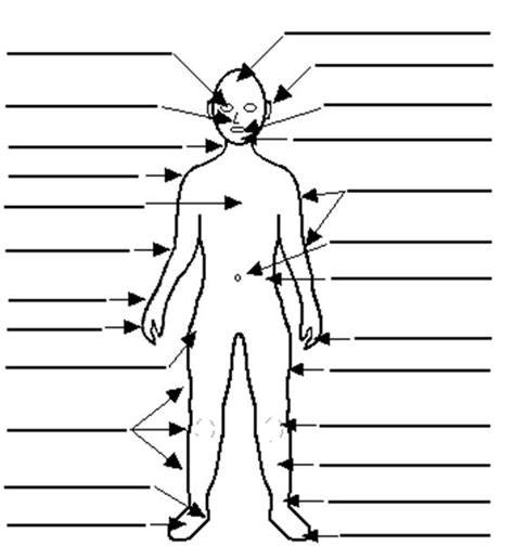 Diagram Of Part Of Human by Of Leisure Summer Flank Organ