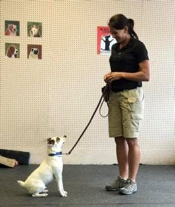 dallas fort worth arlington texas dog training  league