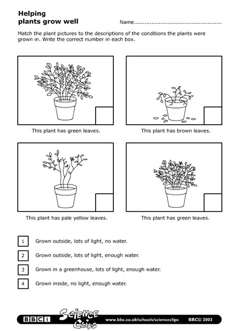 science year 2 worksheets