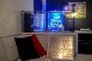 Aquarium Als Raumteiler : vorstellung raumteiler mit 486l reines meerwasser 100 ~ Michelbontemps.com Haus und Dekorationen