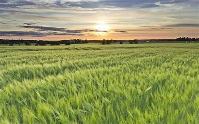 Field Barley Sweden Sunset Night Sun Dog