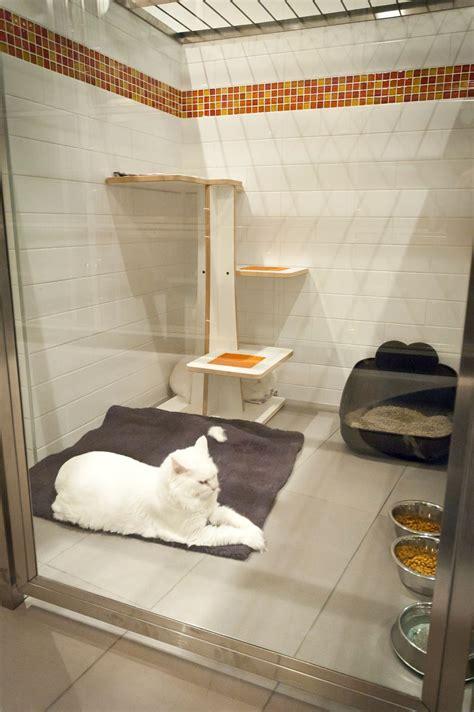 cat condo runs  custom doors perch options