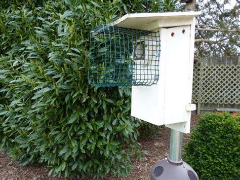 diy bluebird house plans predator guard wooden  diy