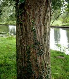 tree trunk flickr photo sharing