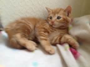 for cats free kittens free to home oldham greater manchester