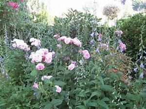 Begleitpflanzen Für Rosen : unterpflanzung begleitpflanzen f r die rosen mein sch ner garten forum ~ Orissabook.com Haus und Dekorationen