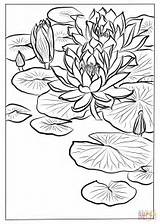 Lily Coloring Water Lilies Printable Monet Ohara Koson Drawing Tiger Ninfee Tags Disegni Template Library Tutorials Malvorlagen Fiori Colorare Sketch sketch template