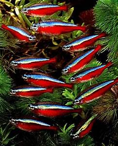 What are some of the most colorful freshwater fish