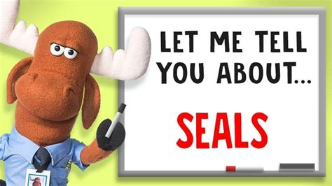 6 fun facts about our flippered friend — the seal ...