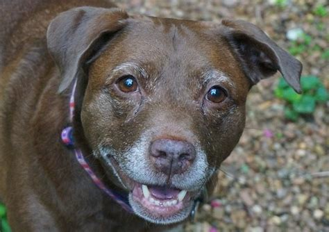 tips  determining  rescue dogs age