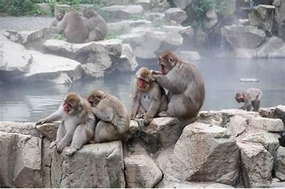 Jigokudani Monkey Park Snow Japan