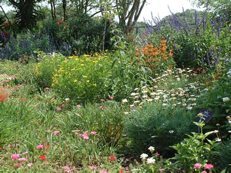 Butterfly Garden Ideas Pictures Photograph