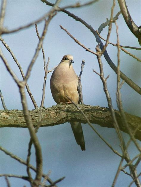 1000 images about doves on pinterest gardens curling