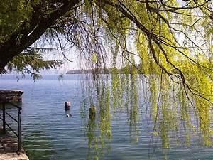 Pflanzenerkennung Per Foto : le pi belle foto di sal bs sul lago di garda ~ Frokenaadalensverden.com Haus und Dekorationen
