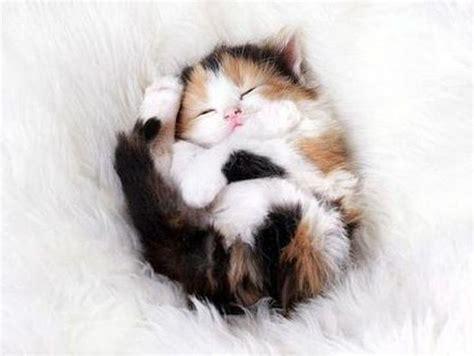 die besten  katzenbabys ideen auf pinterest niedliche