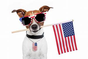 The 10 Most Patriotic Dogs on Shutterstock