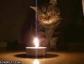 Chion Candele by Cat Staying Warm Gif By Cheezburger Find On Giphy
