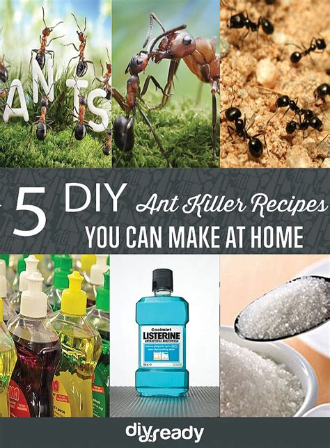 homemade ant killer recipes diy projects craft ideas
