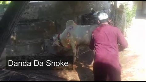 Qurbani of Angry Bull 2020 || Qurbani Eid 2020 || Shoaib ...