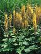 11 Striking Bog Plants | Gardens, Sun and Design