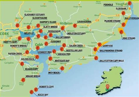 south  east cork bird trail youghal