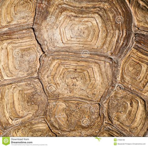 brown turtle shell background royalty  stock