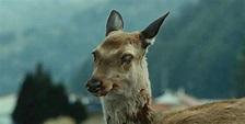 """北美""""殭屍鹿""""是假的但致命""""病毒""""是真的   未分類 – 改變的力量"""