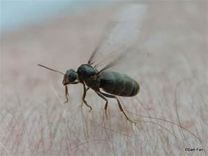 Farr family blog part 2 flying ant day for Winged ants in bathroom