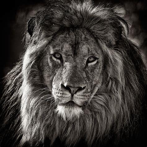 canaper noir et blanc la faune en noir et blanc david garnier flickr