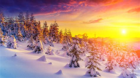 Hd Winter Photo by Sunset In Winter Landscape Snow Tree Trees Snowdrops