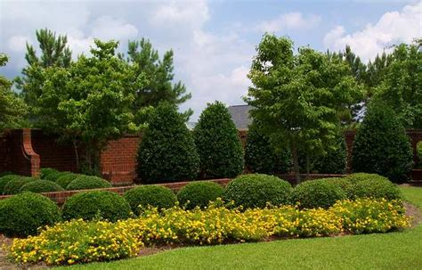 price of trees for landscaping price of trees for landscaping 28 images buy sylvester palm trees for sale in orlando
