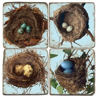 Nests - FieldBirdy