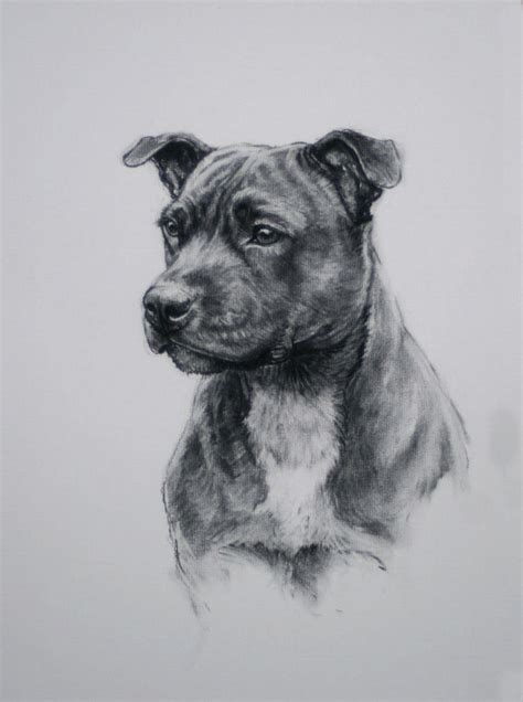 staffordshire bull terrier dog drawing limited edition