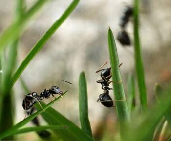 ameisen im haus was tun was tun gegen ameisen im haus oder garten zuhause net