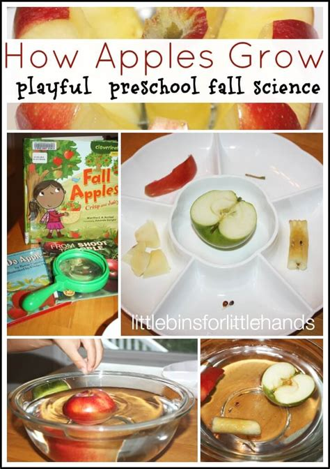 science activities around the house bins for 121 | Apple Science Activity How An Apple Grows