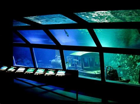 aquarium de la r 233 union gilles les bains 2017 ce qu il faut savoir pour votre visite