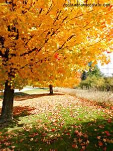 Fall Foliage Michigan