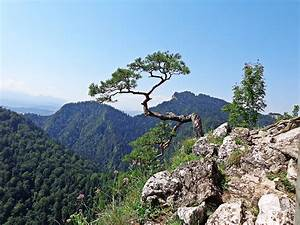 Free, Images, Landscape, Tree, Nature, Forest, Grass, Rock