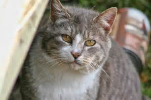 gray cat names curious cat names images