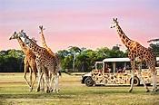 Sunset Safari at Werribee Open Range Zoo - MELBOURNE GIRL