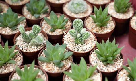 hacer un jard 237 n en miniatura con plantas crasas bricoman 237 a