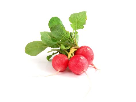 what is radish free food images and stock photos