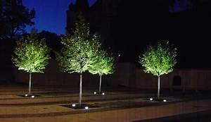 Modernes lichtmanagement im buro gebaude und pflanzen mit for Feuerstelle garten mit bonsai led