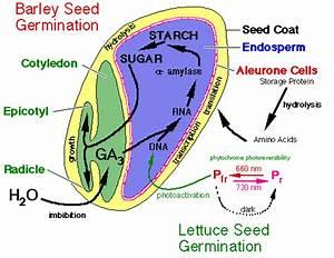 Seed Germination Part 2