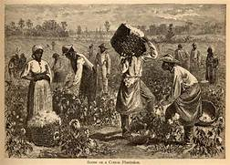 illustration slaves worked on plantations in the south to make  Slavery In The South