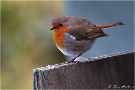 jason steel wildlife photography
