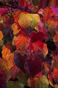Beautiful Autumn Fall Colors